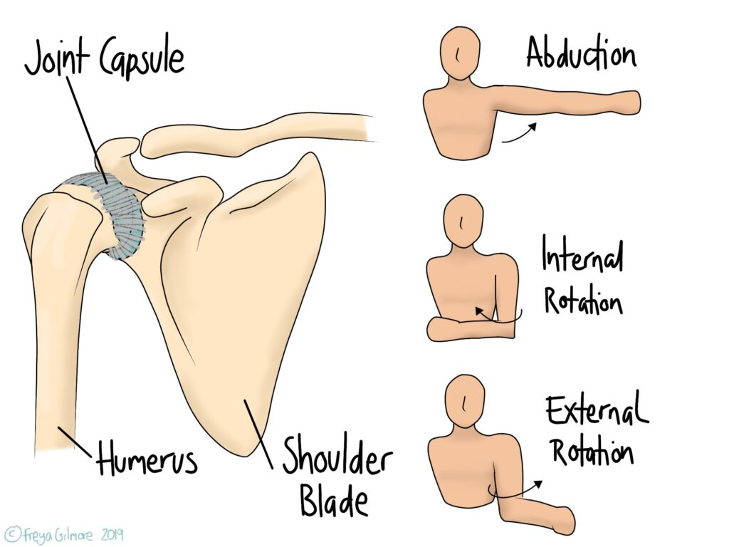 Movements affected by frozen shoulder, view of joint capsule